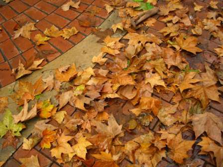 video de la cancion hojas secas: